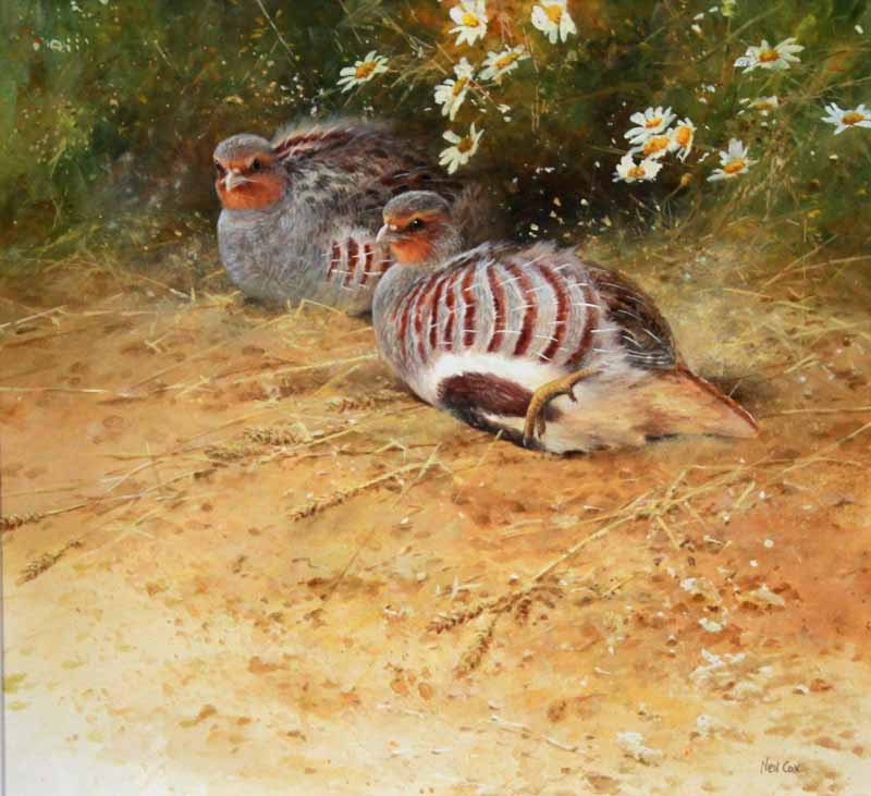 Partridges by NEIL COX