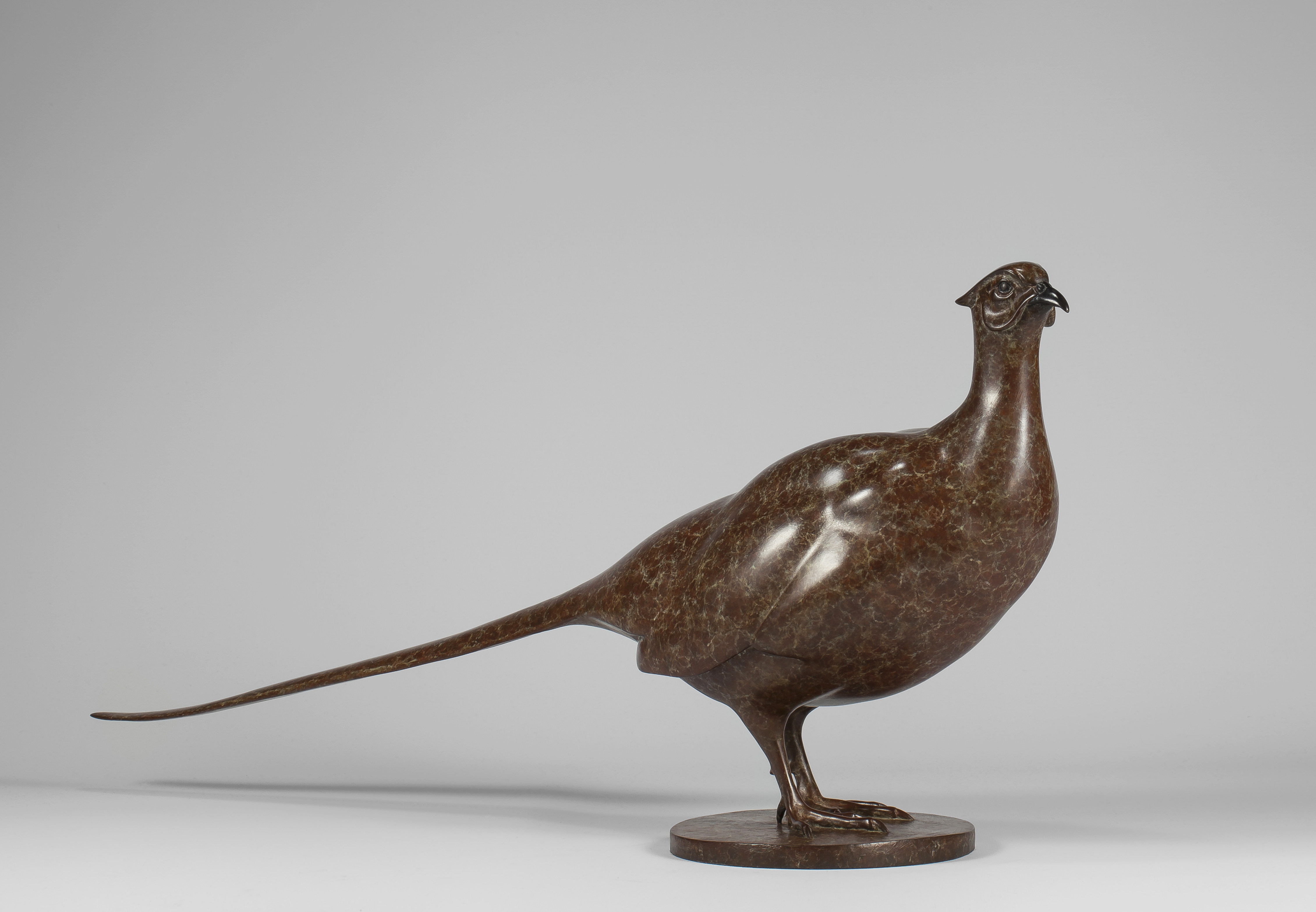 Pheasant by